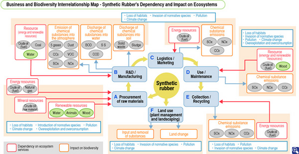 Business and Biodiversity Interrelationship Map - Synthetic Rubber's Dependency and Impact on Ecosystems
